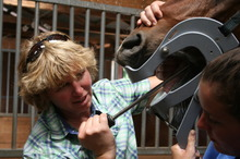 Dr. Ann Wimmer performs routine equine dental care